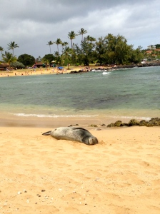 Hawaiian Monk Seal hanging loose