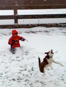 Snowball and dog hang time