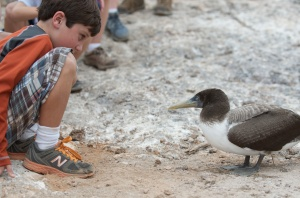 In the Galapagos, Luke and a Nazca booby enter into each other's inherent bunniness.
