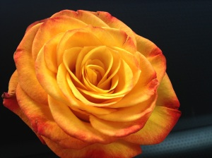 This rose is a symbol of my renewal and my promise to myself to be brave...even in the face of family.