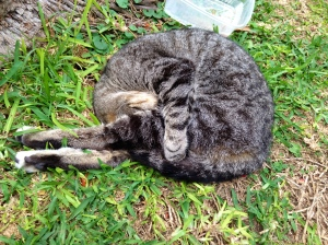Yoga cat in Parque Kennedy