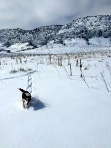 The beast enjoying the fresh snow