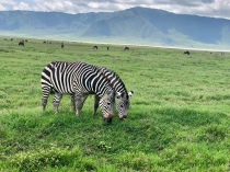 Zebras with a view