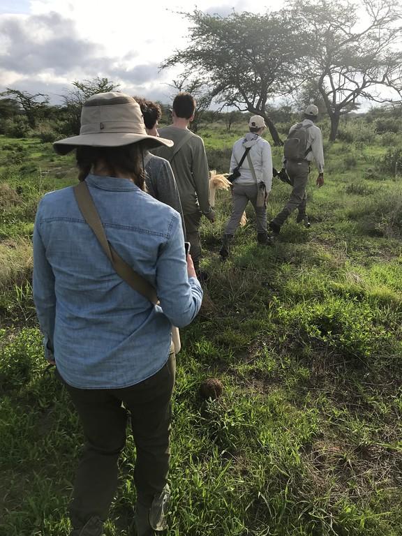 walkingsafari
